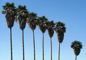 Palm Family